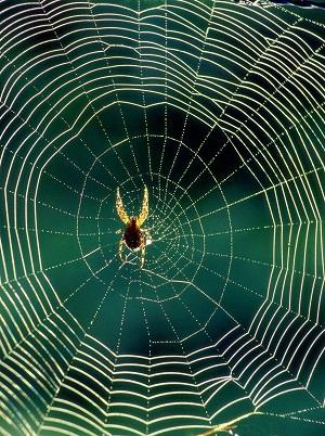 Côn trùng và nhện