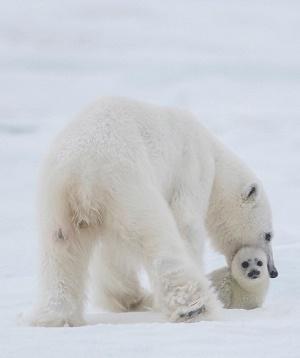 Thiên nhiên hoang dã băng giá - Những kỳ quan ẩn giấu của mùa đông